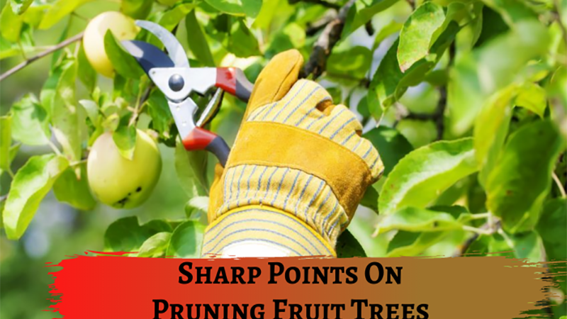 4 Sharp Points On Pruning Fruit Trees