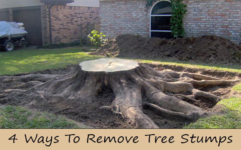 4 Reasons for Tree Stump Removal